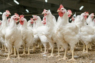 Poultry industry takes on US chicken quota as court case brews