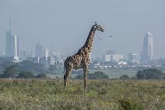 US seeks companies' views on trade pact with Kenya