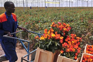 Kenya: Flowers a Growing Sector Amid Recession